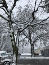 snow coveredt trees