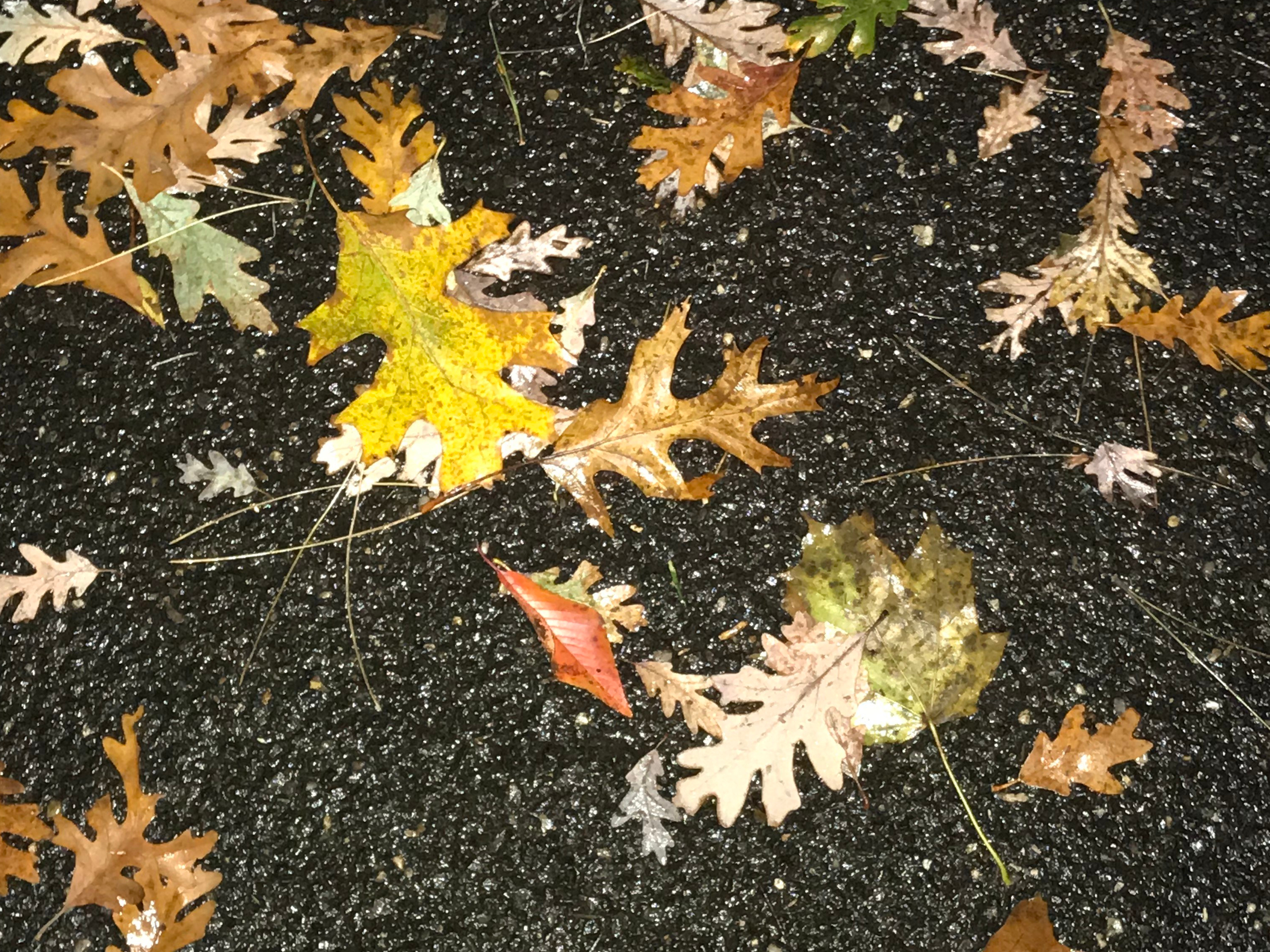 Rainy Autumn Day on a Walk 2018